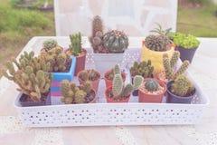 Grupa inkasowy kaktus w garnku na marmuru stołu tle pastelowego koloru lub rocznika styl Zdjęcie Stock