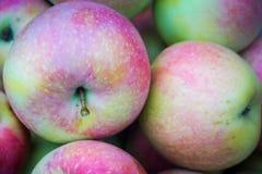 Grupa jabłka Obraz Royalty Free