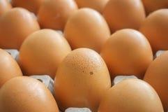 grupa jajko w panelu Obraz Stock