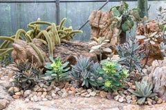 Grupa kaktus obrazy stock