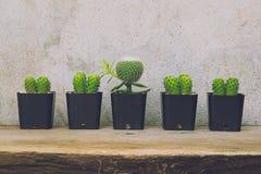 Grupa kaktusowe rośliny Obraz Royalty Free