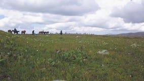 Grupa końscy jeźdzowie ma zabawę w górach klamerka Grupa ludzi na horseback na naturze zdjęcie wideo