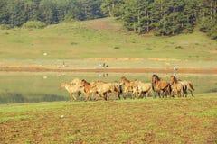 Grupa konia bieg Obraz Stock