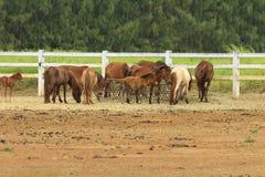 Grupa konie Obrazy Stock
