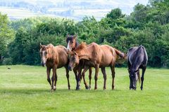Grupa konie zdjęcia royalty free