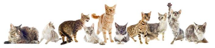 Grupa koty Zdjęcie Royalty Free