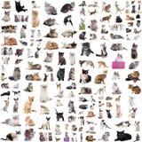 Grupa koty Obraz Royalty Free