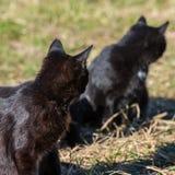 Grupa koty Zdjęcie Stock