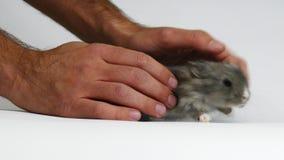 Grupa króliki w studiu zbiory wideo