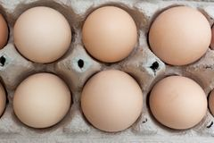 Grupa kurczak?w jajka w papierowym jajecznym tacy pude?ku zdjęcie stock
