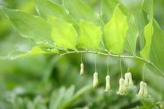 grupa kwiat Zdjęcia Stock