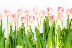 Grupa kwiaty różowi tulipany na białym tle panorama niebieska spowodowana pola pełne się chmura dzień zielonych roślin krajobrazu Obrazy Stock