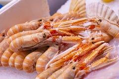 Grupa langoustines także znać jako scampi, Norway homar, Dublin podpalana krewetka Tradycyjnej premii smakowity naturalny organic zdjęcie royalty free