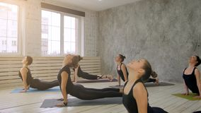 Grupa ludzi relaksuje joga i robi, ćwiczy zmniejszający się pies Obraz Stock