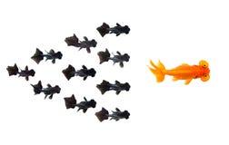 Grupa Mały czarny goldfish po goldfish lider odizolowywający na białym tle pokazuje lider indywidualności sukces lub fotografia stock