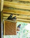Grupa mali mali egzotyczni zebr finches siedzi wpólnie na ptaka domu obrazy stock
