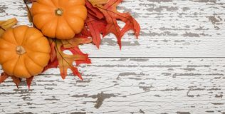 Grupa miniaturowa bania i liście na drewnianym deseczki tle zdjęcia royalty free