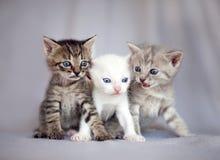 Grupa młodzi koty Zdjęcia Royalty Free