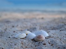 Grupa morze skorupy na plaży Obraz Royalty Free
