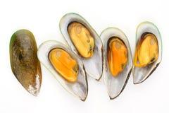 Grupa mussels Obraz Stock