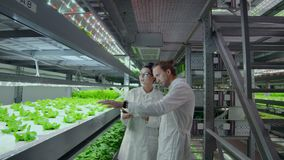 Grupa nowożytny naukowiec biotechnologii naukowiec w białym kostiumu z pastylką dla pracować organicznie hydroponic warzywa zbiory