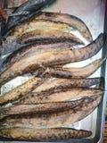 Grupa Orężny spiny węgorz na talerzu Węgorze są elongated ryba, rozciąga się w długości od 5 cm zdjęcia royalty free