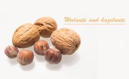 Grupa orzechy włoscy i hazelnuts odizolowywający na bielu Zdjęcia Stock