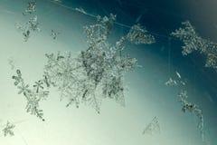 Grupa płatka śniegu szczegół obraz stock