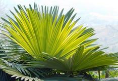 Grupa palma leaves2 Obrazy Stock