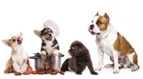 Grupa pies i jedzenie obraz royalty free