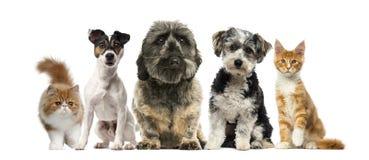 Grupa pies i kot Obrazy Stock
