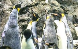 Grupa pingwiny w zoo Fotografia Royalty Free
