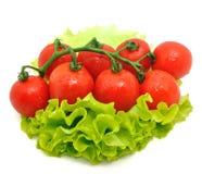 Grupa pomidor i zielona sałatka na białym tle Obraz Stock