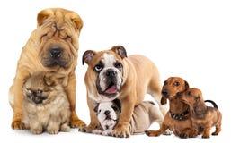 Grupa psy zdjęcia stock