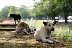 Grupa psy na ściana z cegieł Fotografia Stock