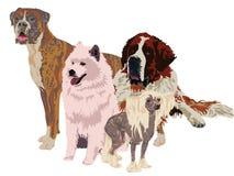Grupa psy różni trakeny Obraz Stock