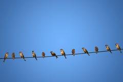 Grupa ptaki na linii energetycznej pojęciu ryzyko Fotografia Stock