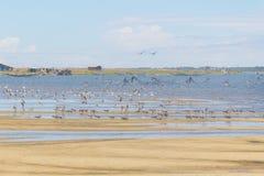 Grupa ptaki przy Lagoa robi Peixe obrazy royalty free