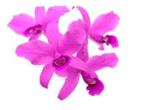 Grupa różowa orchidea Obrazy Stock