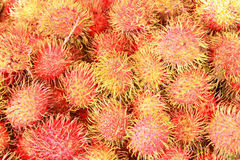 Grupa rambutan.Group Lay jak wzór Obrazy Royalty Free