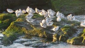 Grupa sandpipers na plaży obraz royalty free