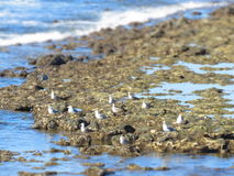 Grupa seagulls obrazy royalty free