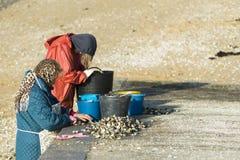 Grupa shellfish gromadzenia się milczkowie Fotografia Royalty Free