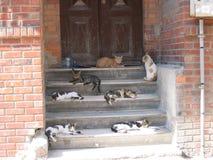 Grupa siedem lied puszków koty na schodach stary dom Istanbuł w Turcja Obrazy Royalty Free