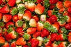 Grupa strewberry Obrazy Royalty Free