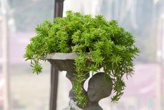 Grupa succelent roślina Obraz Stock