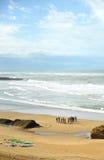 Grupa surfingowowie na plaży, uczenie, Cadiz, Hiszpania Obrazy Stock