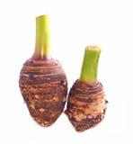 Grupa taro korzenie na bielu zdjęcia stock