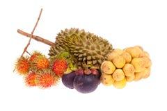 Grupa tropikalna owoc Fotografia Royalty Free