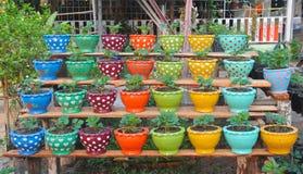 Grupa Truskawkowa roślina w jardiniere fotografia stock